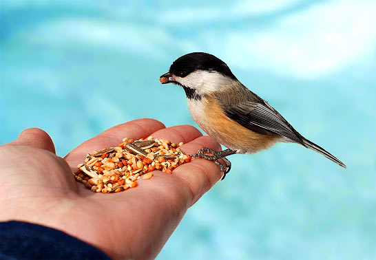 Seeds are precious... as are the birds that love them. Pure, heirloom and organic seeds self reproduce.