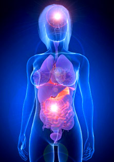Neurogastroenterology - You have two brains - one in your head, one in your gastrointestinal system - your gut